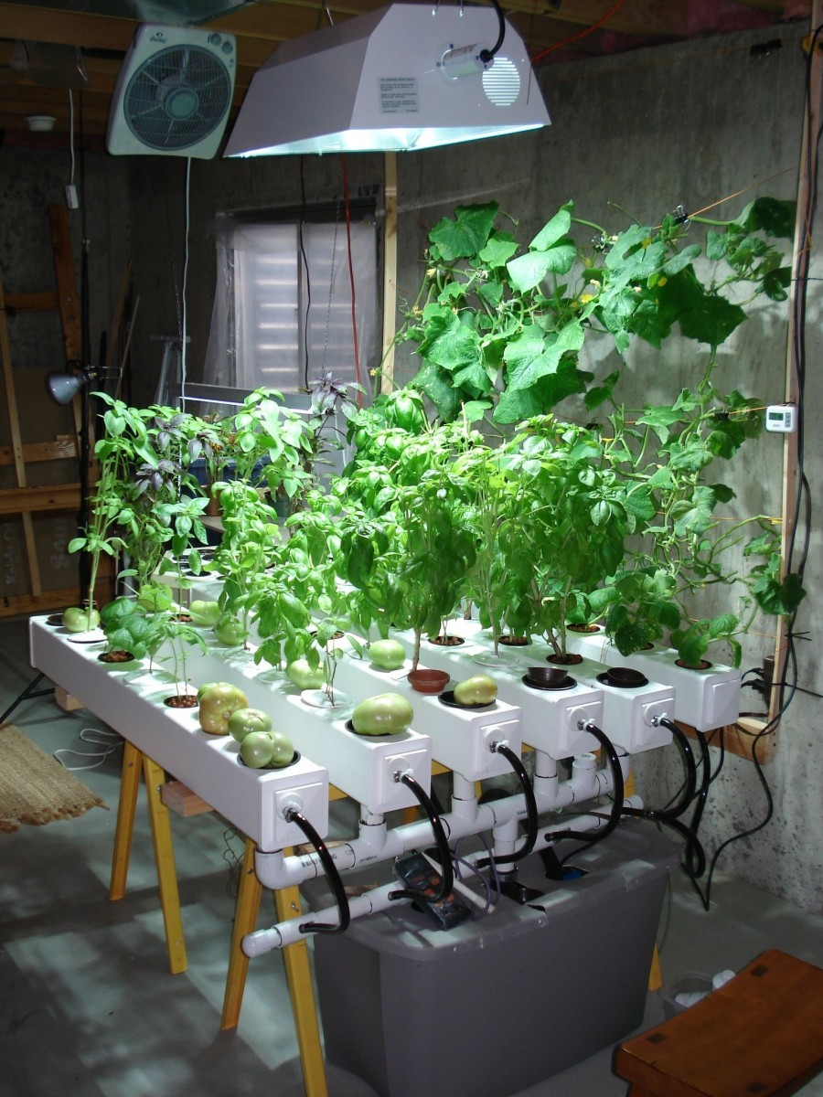 vegetables i can grow indoors
