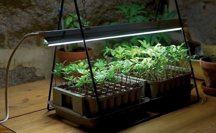 Image result for Growing plants indoors